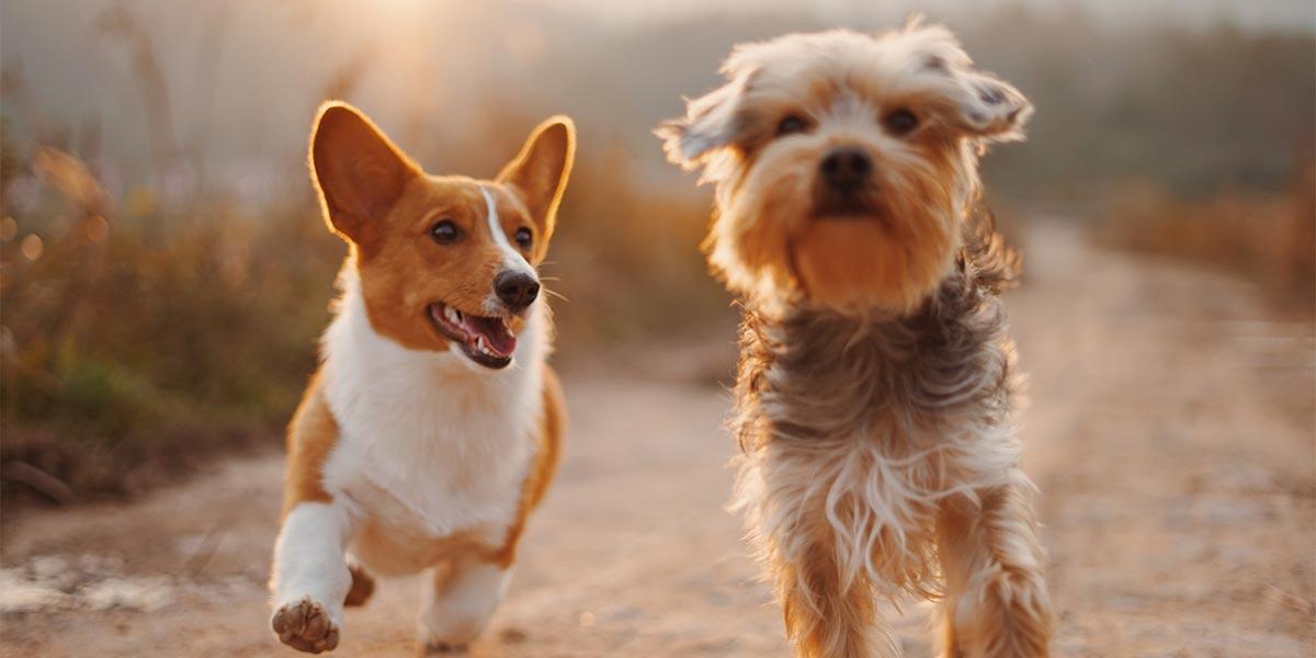 Hayvanları Koruma Kanunu Kapsamında Yapılan Değişiklikler
